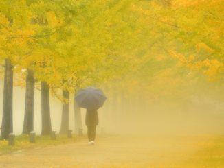 各務原市-(学びの森)雨に煙る