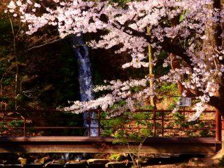 須坂市-(臥竜公園)桜と小さな滝