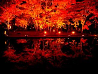 (土岐市)曽木公園-紅葉