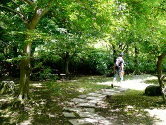 (守谷市)四季の里公園-公園を散歩する男性の後ろ姿