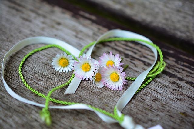 daisy-3392654_640