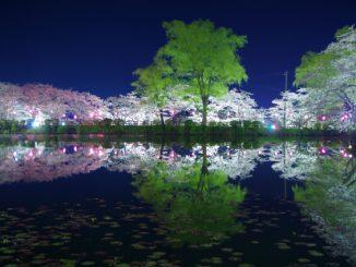 茂原市-(茂原公園)茂原の夜桜リフレクション