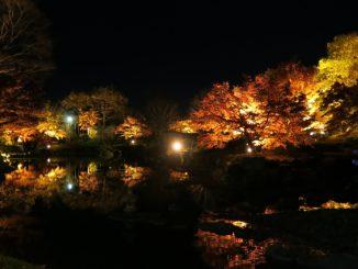 藤岡市-藤岡市_桜山公園_秋のライトアップ
