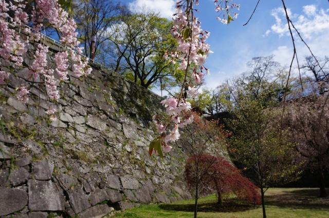 盛岡市-(盛岡城跡公園)お城と桜