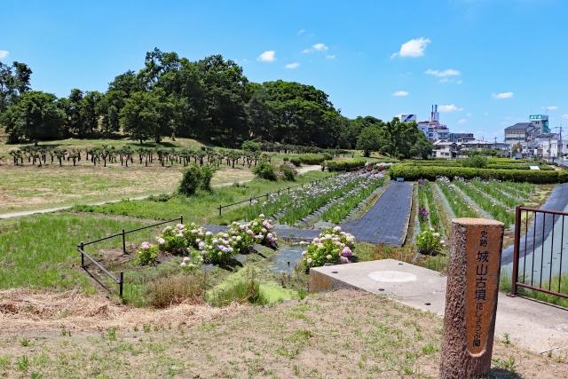 藤井寺市-津堂城山古墳の花しょうぶ園
