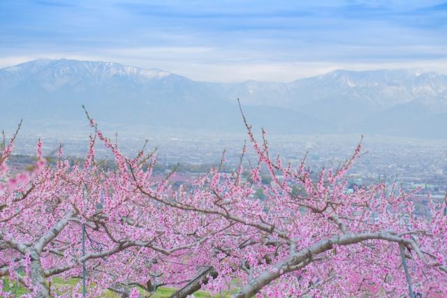 笛吹市-アルプスの山々と桃花畑