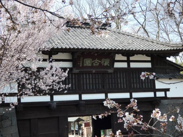 小諸市-満開の桜と小諸城「三の門」_懐古園