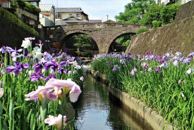 玉名市‐(高瀬裏川水際緑地公園)花ショウブ祭り