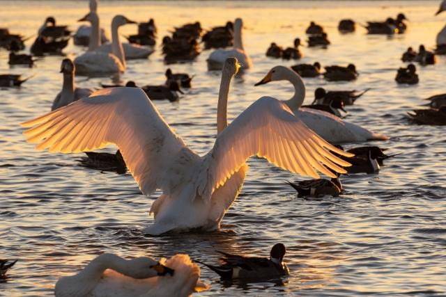 印西市‐(白鳥の郷)印西市白鳥の里