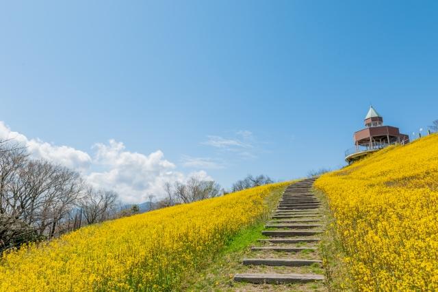 四国中央市‐青い空と菜の花畑